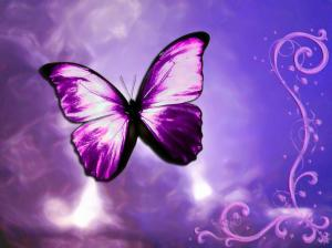 butterfly-life-violet-awesome