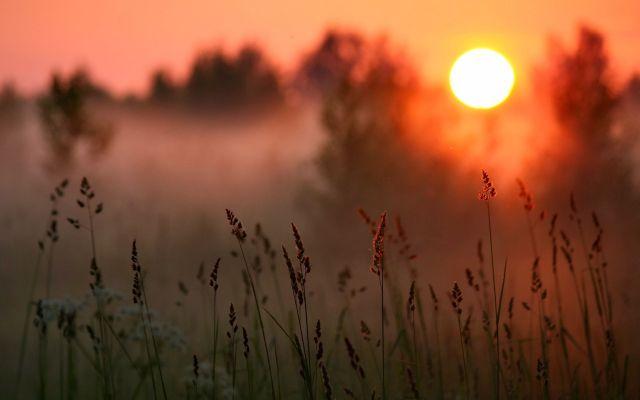 Sunset-forest-grass-warm-sun