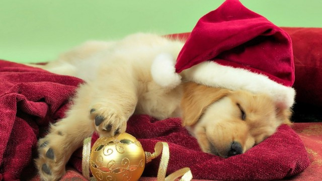 merry-christmas-wallpapers-puppy-hd-1080x608